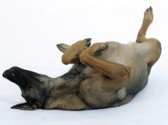Mixed Breed Dog | Mischlingshund /